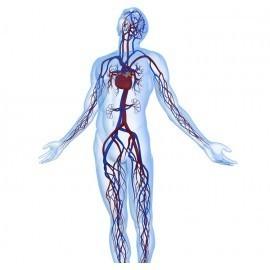 מערכת כלי דם